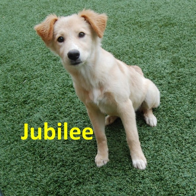 Jubilee is a female dog available at the Wichita Falls Animal Services Center. The shelter is participating in the Clear the Shelter event Saturday, Aug. 17. Adoption fees on this day will be $25 per pet - half of the usual price.