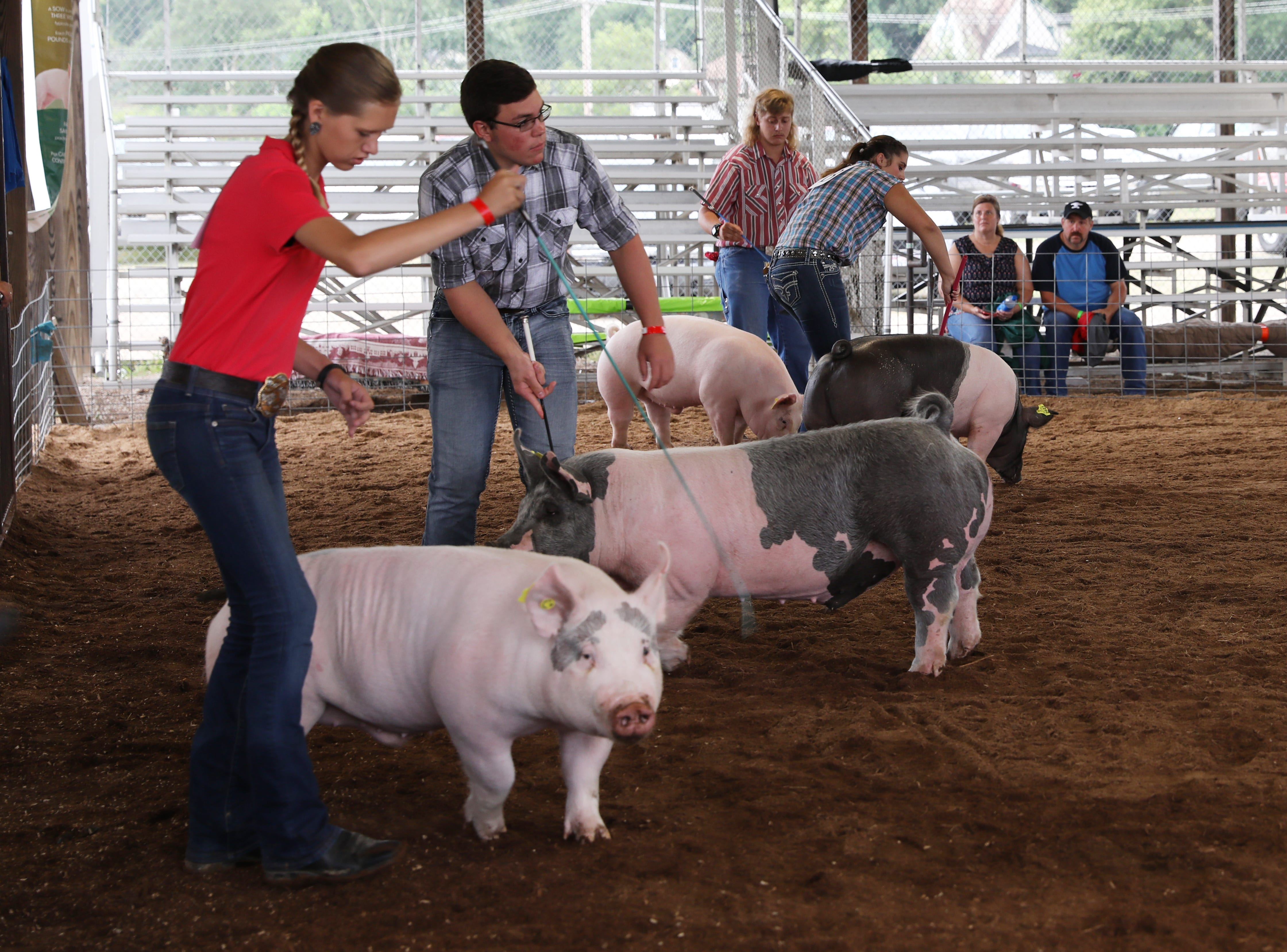 Camryn Caplinger, left, Adam Crock, Tom Mozena and Jaylee Jordan show hogs during the Showman of Showmen competition at the Muskingum County Fair on Friday.