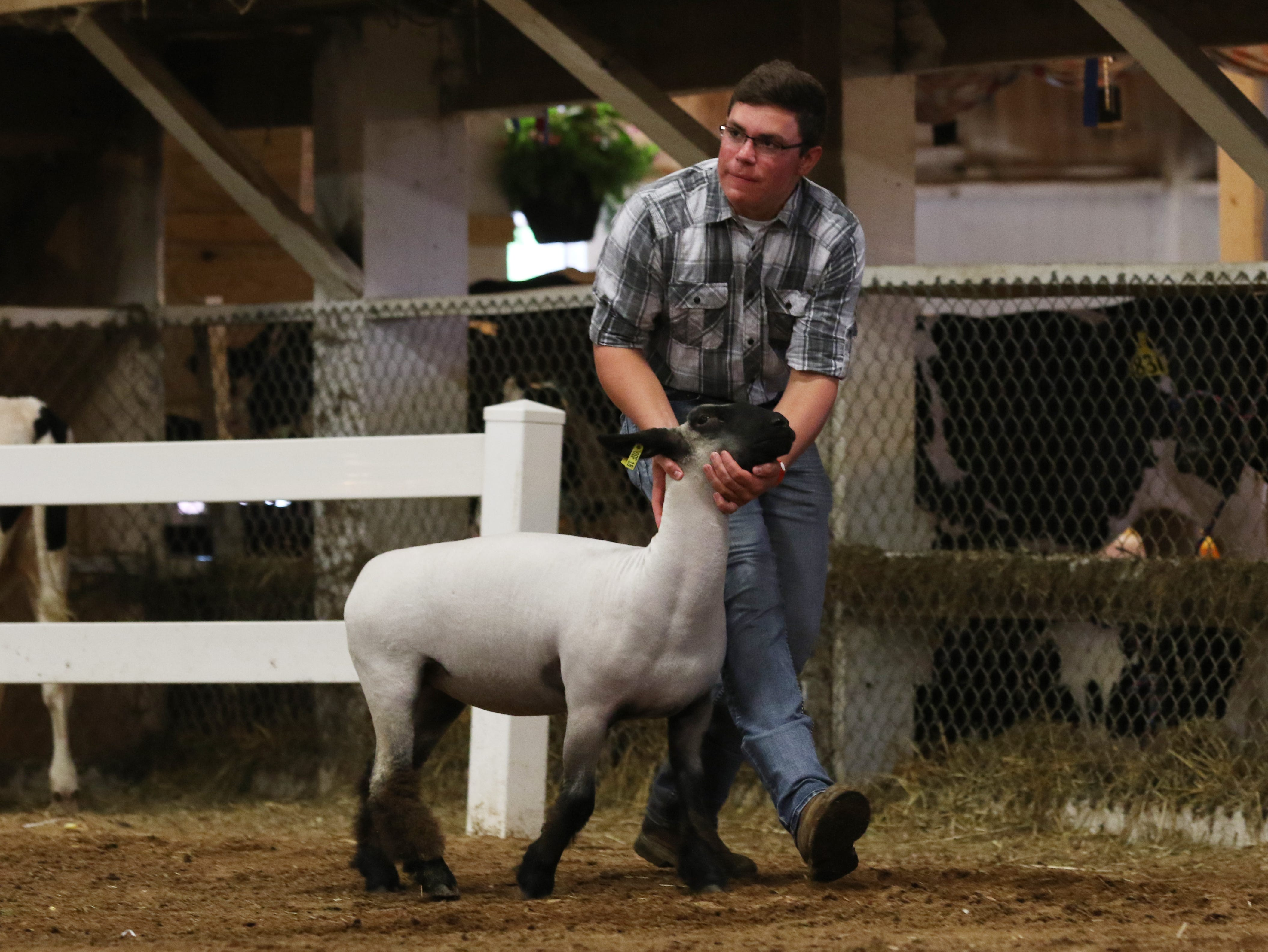 Tyler McKenzie shows a sheep during the Showman of Showmen competition at the Muskingum County Fair on Friday.