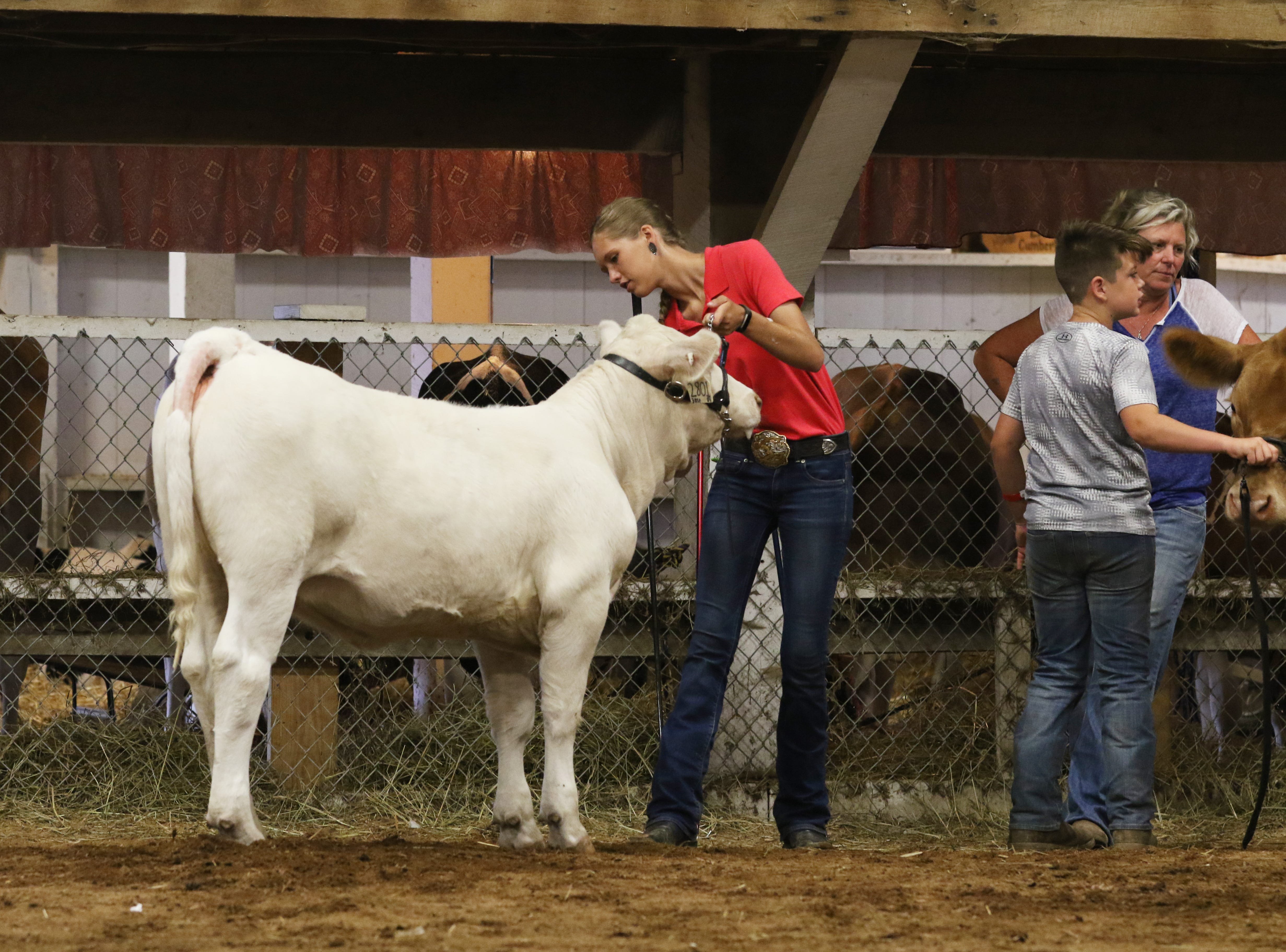 Camryn Caplinger shows a steer during the Showman of Showmen competition at the Muskingum County Fair on Friday.