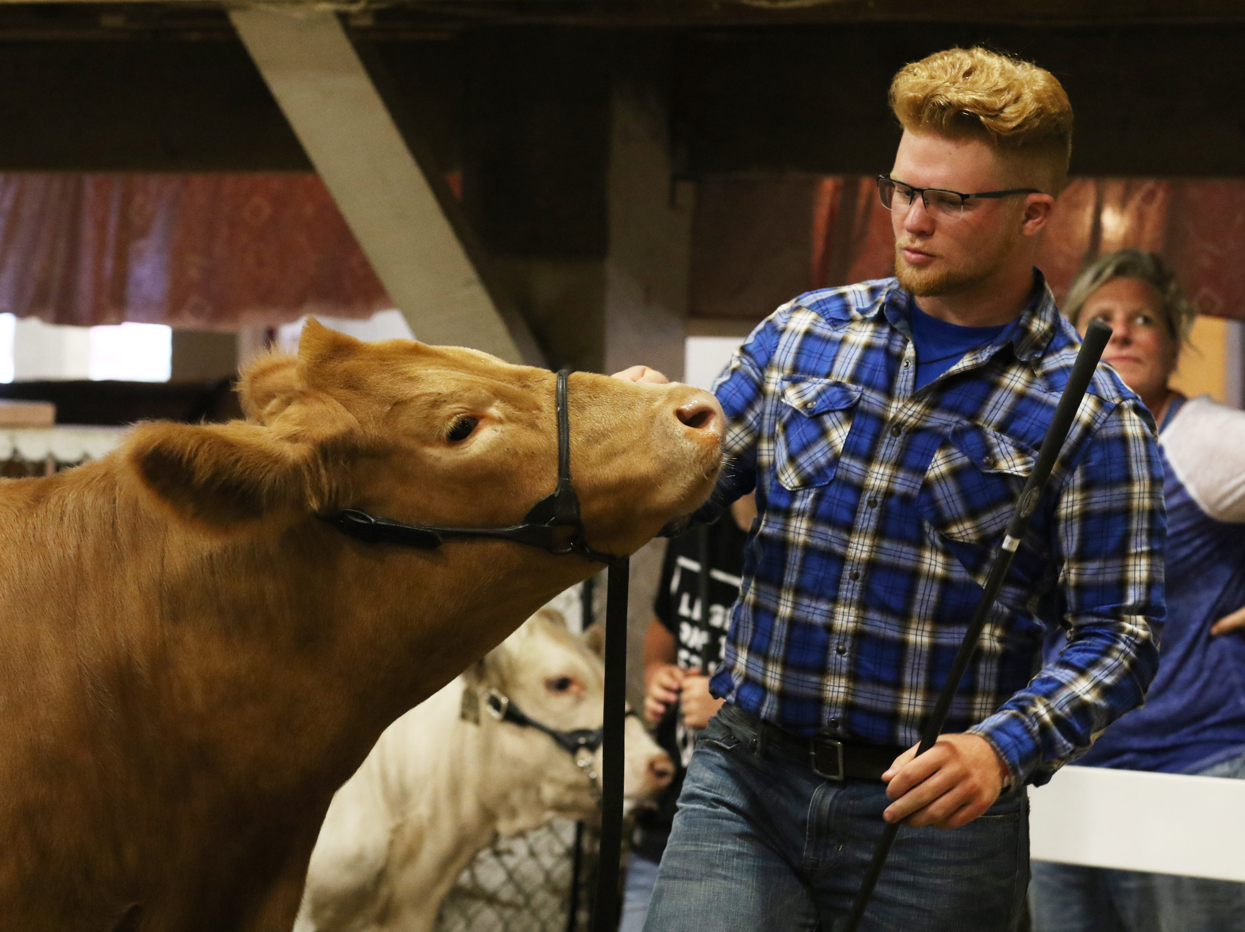 Tyler McKenzie shows a steer during the Showman of Showmen competition at the Muskingum County Fair on Friday.