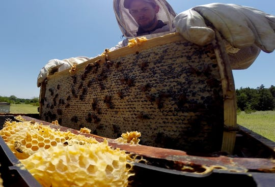 At age 12, Blake Shook started beekeeping as a casual hobby. Now he owns Desert Creek Honey in Blue Ridge, Texas.