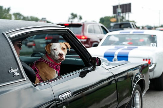 Anna Hermann of Ray Township and her dog Holly cruise in a 1971 Pontiac Grand Prix along Woodward Avenue in Royal Oak during the Woodward Dream Cruise, Saturday, August 18, 2018.