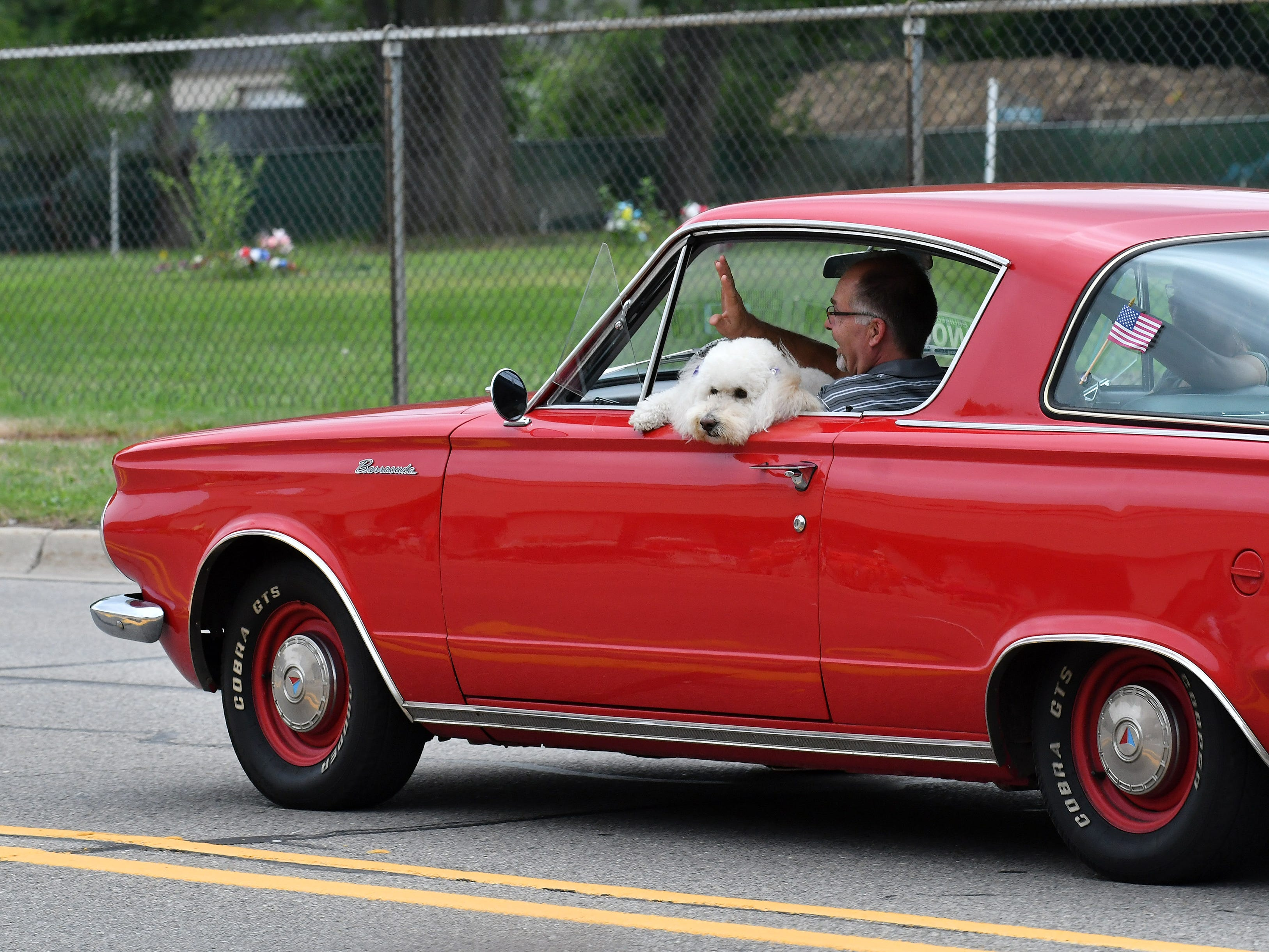 A man driving a Plymouth Barracuda lets his dog say hello at the Berkley CruiseFest Classic Car Parade Friday on 12 Mile in Berkley.