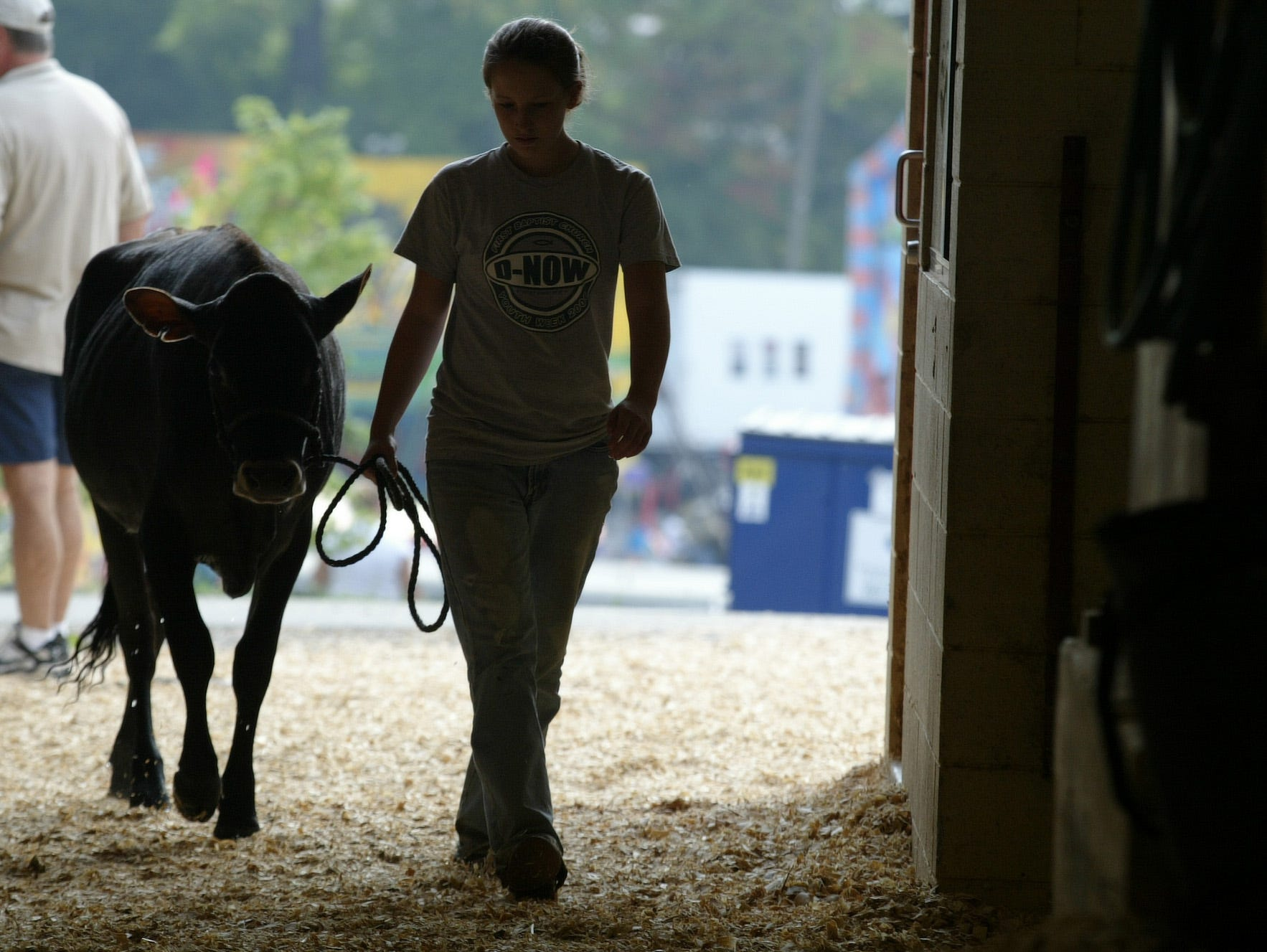 Rebecca Burkhart, 15,  of Greenback leads her Jersey calf back to its stall on Sunday at the Tennessee Valley Fair in 2006. Burkhart was competing in the livestock show.