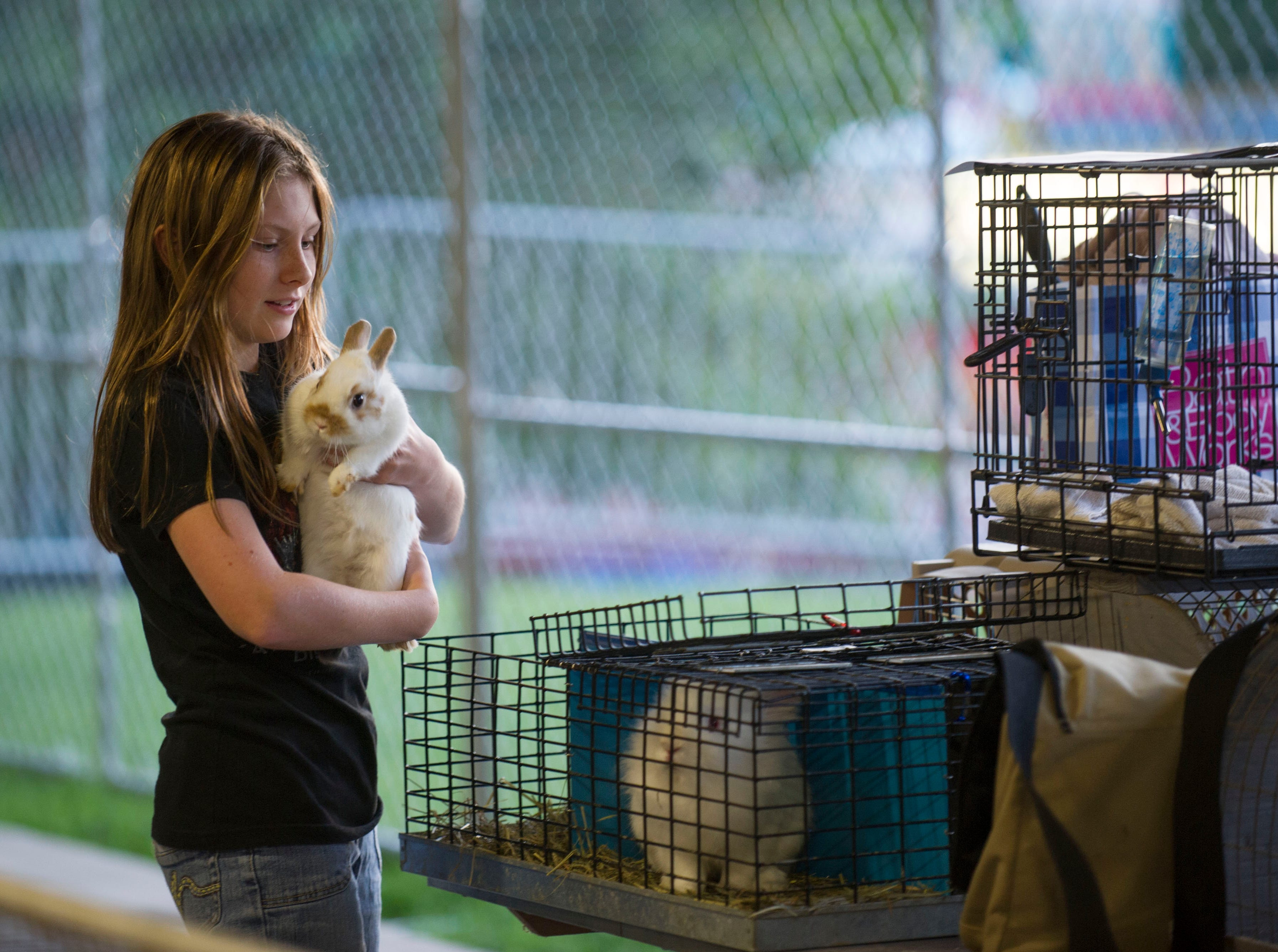 Sabrina Johnson tends to her Netherland dwarf rabbit named 'Freckles' at the Tennessee Valley Fair on Thursday, Sept. 5, 2013, at Chilhowee Park. The Loudon County 4-H member is readying the 2-year-old for competition in the senior buck category.