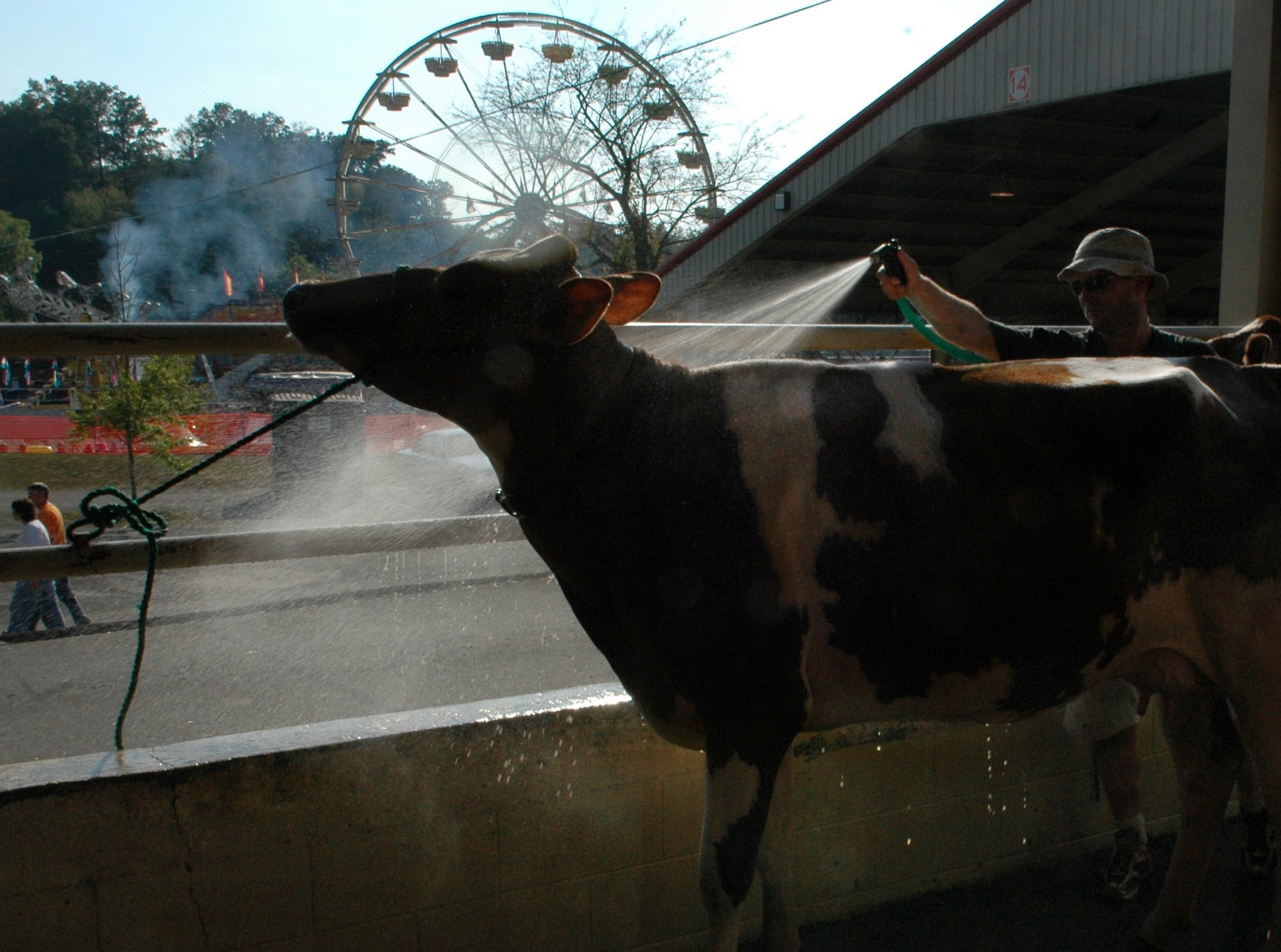 David Croshaw of Parksville, Ky., washes one of his cows named Ivy as people start to wander into Chilhowee Park during the opening day of the Tennessee Valley Fair Friday in East Knoxville in 2005.
