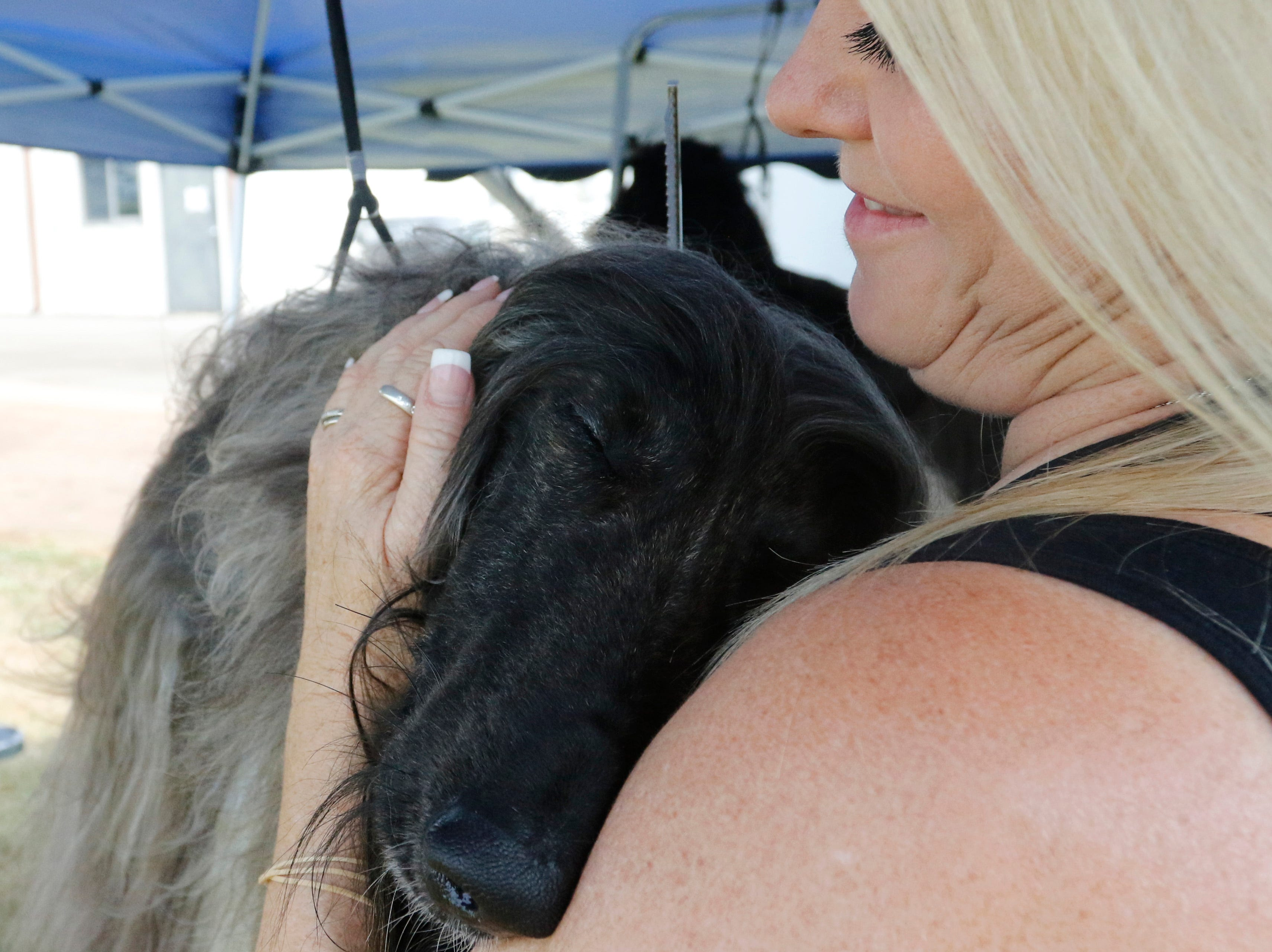 Indy, an Afghan hound, gets a hug from his handler Tabitha Bettis as she grooms him before competing during the Marshfield Area Kennel Club's All-Breed Dog Show, Obedience Trials and Rally Trials at the Central Wisconsin Fairgrounds in Marshfield Saturday, August 18, 2018.