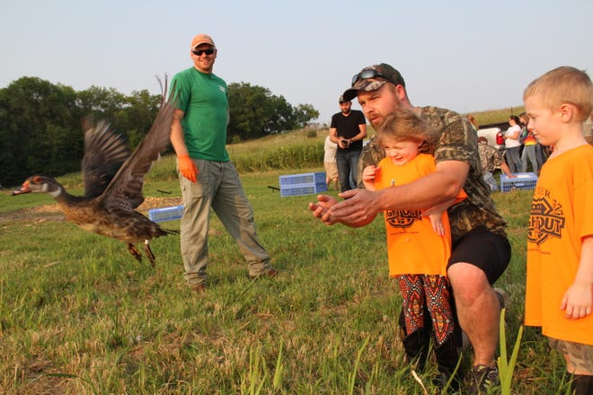 Matt Snuggs of Menomonee Falls releases a wood duck at Horicon Marsh as his daughter Sadie, 4, son Max, 5, and DNR wildlife technician Kyle Lazotte (left) look on. The bird was banded as part of a long-standing project to track movements of migratory waterfowl.