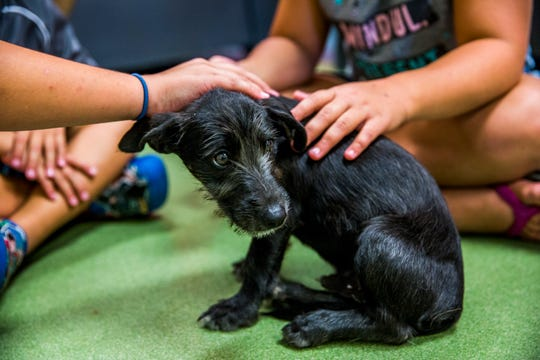 Potential adopters meet a puppy during the Clear The Shelters event at Humane Society Naples on Saturday, Aug. 18, 2018. All adoption fees were waived Saturday for qualified adopters.