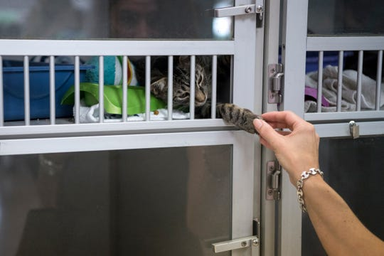 A pet adoption drive at Bergen County Animal Shelter on Saturday, August 18, 2018.