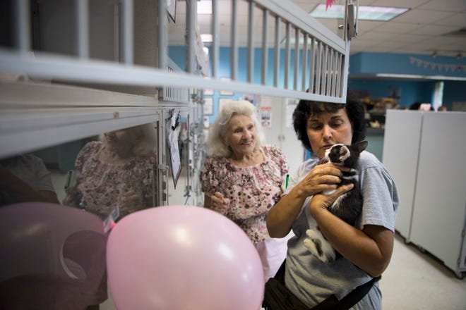 A pet adoption drive at Bergen County Animal Shelter on Saturday, August 18, 2018. (right) Volunteer Lina Lopardo holds a kitten as Vilma Briccola looks on.