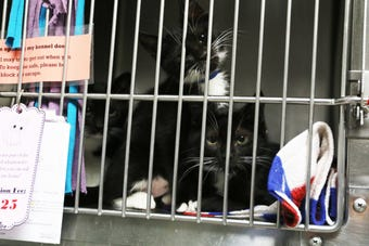As part of the nationwide Clear the Shelters campaign, Willamette Humane Society is hosting a two-day adoption event Aug. 18-19.