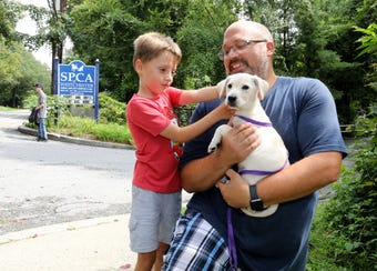 The Clear the Shelters adoption event was held at the SPCA of Westchester in Briarcliff Manor, Aug. 18, 2018.