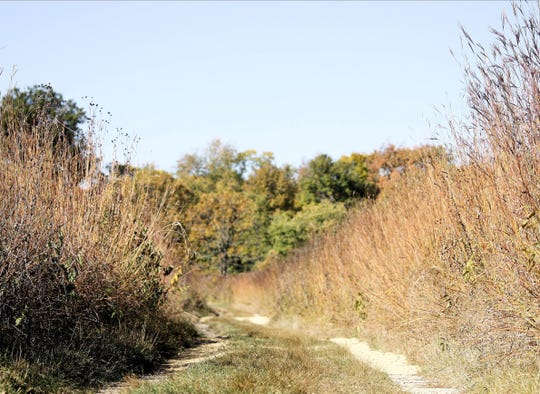 The UW Arboretum is a popular destination in Madison for hiking excursions.