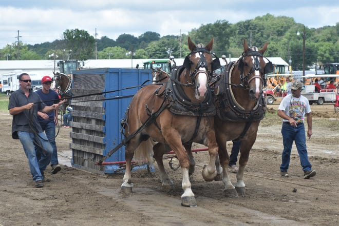 Chris Brewer (left) drives his horses, Rowdy and Piper, in the Horse Pull on Saturday during the final day of the Muskingum County Fair.