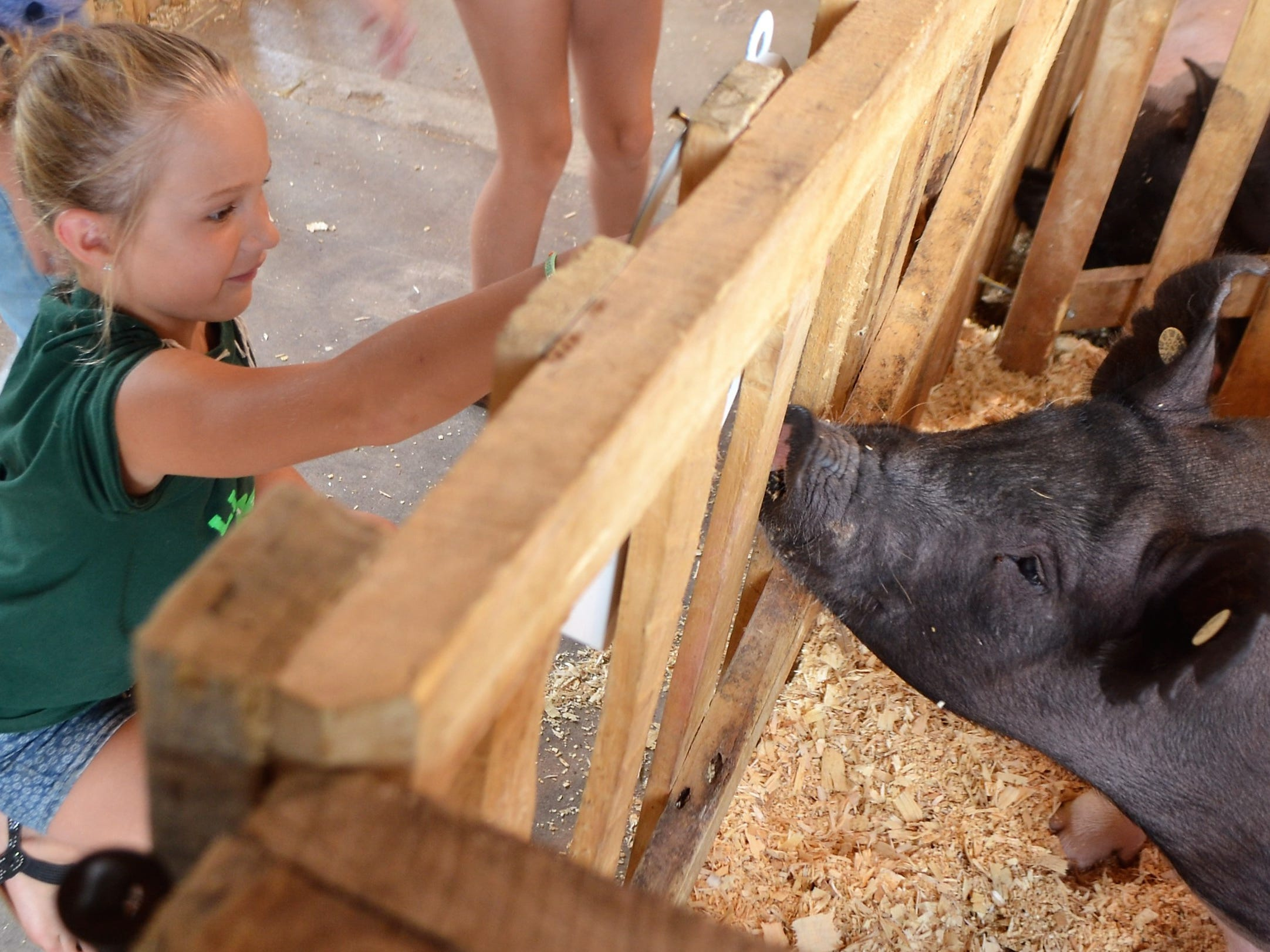 Kaitlyn Borkovec, 9, of Lena, gets close view of a pig at the Oconto County Fair on Saturday, Aug. 18.