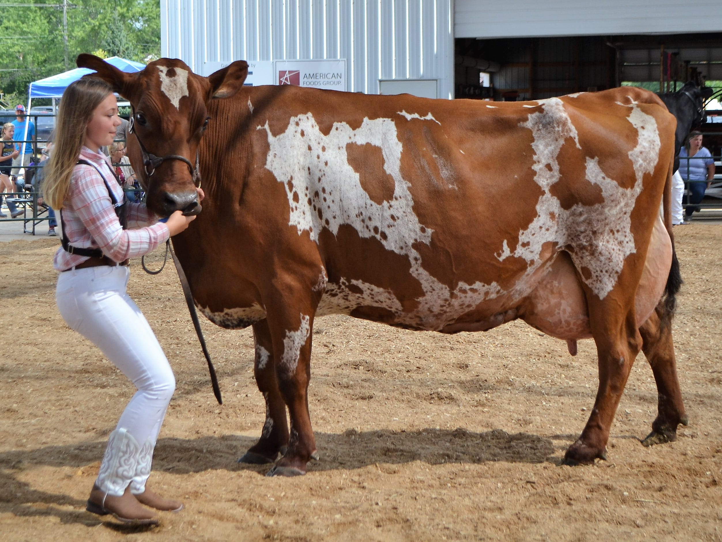 Hope Hahn of Northern Riders 4-H Club won grand champion honors her Ayrshire in the Junior Dairy Cattle Judging at the Oconto County Fair on Saturday, Aug. 18.