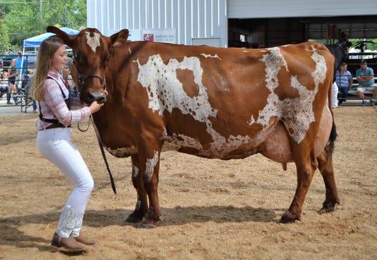 Fair5 Hahnhope Cow 9332