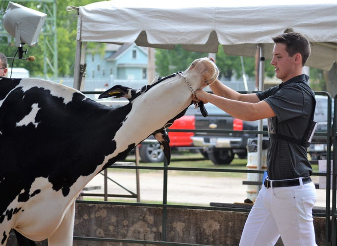 Brenton Wolf of Oconto Falls FFA works to control his cow during the Junior Dairy Cattle Judging at the Oconto County Fair in Gillett on Saturday, Aug. 18. Wolf won Reserve Grand Champion for overall registered holstein.