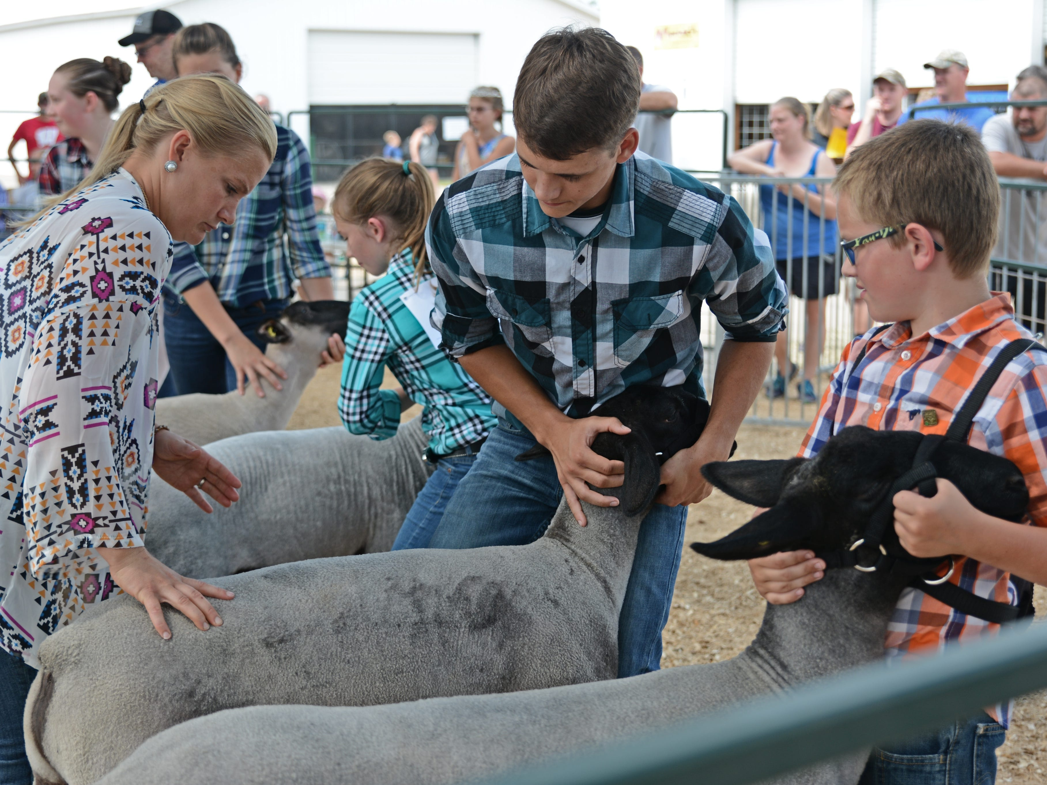 Judging of the Heavyweight Market lambs at the Oconto County Fair on Friday, Aug. 17.