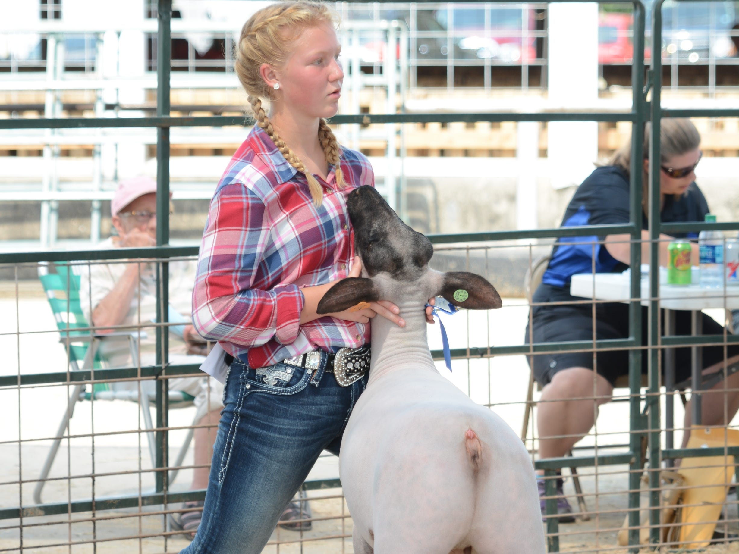 Macie Reed of Northern Riders 4-H Club steadies her sheep during a show Friday at the Oconto County Fair. Reed won the Heavyweight Class for Market Lambs and the prize of Grand Champion.