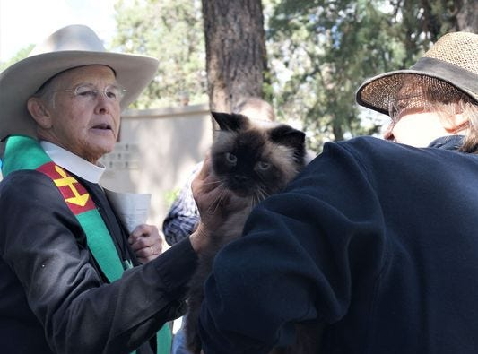 A feline pet is blessed in a prior year's event
