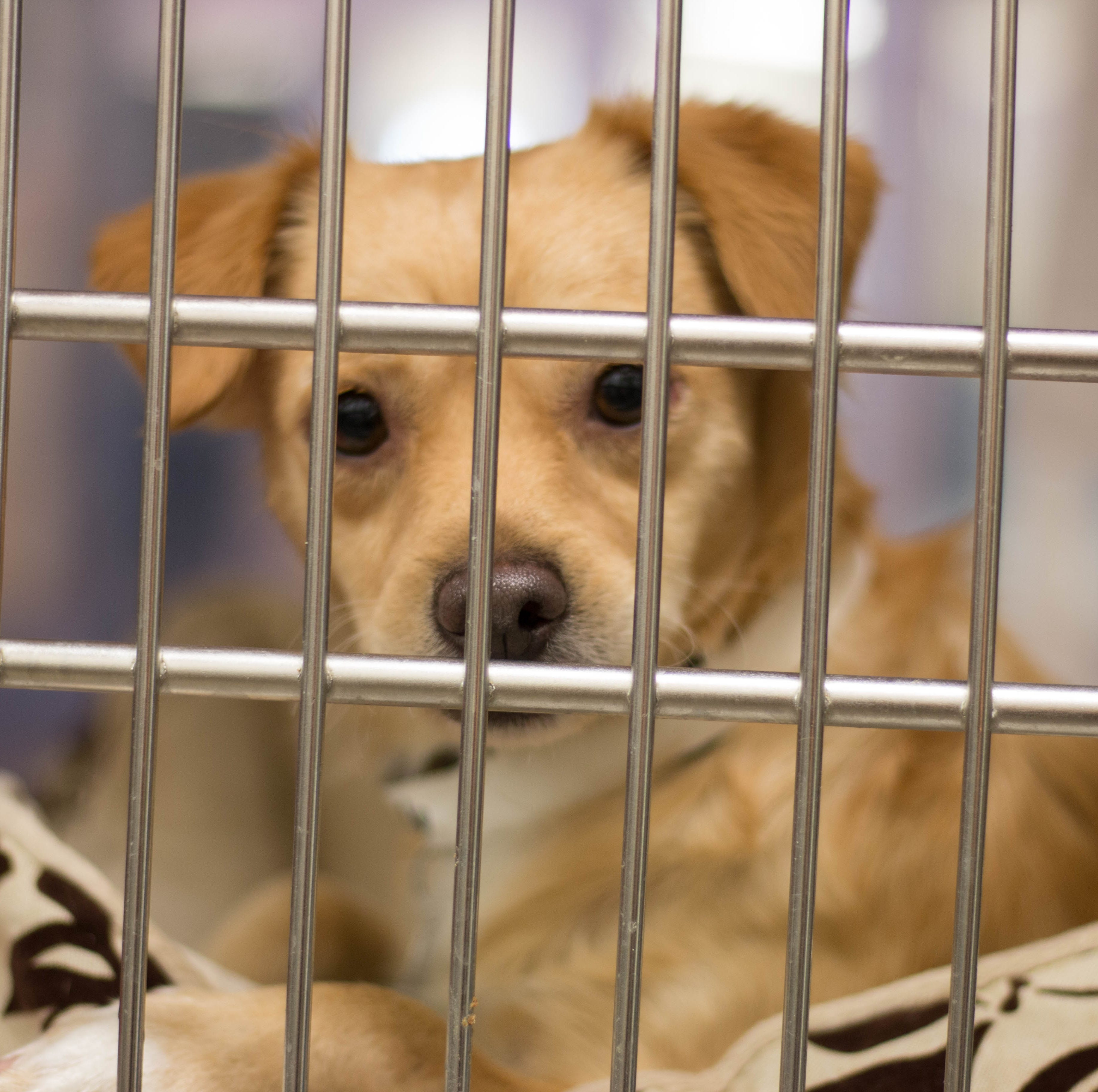 'Clear the Shelter' day: Free adult pet adoptions at Maricopa County shelters in Phoenix and Mesa