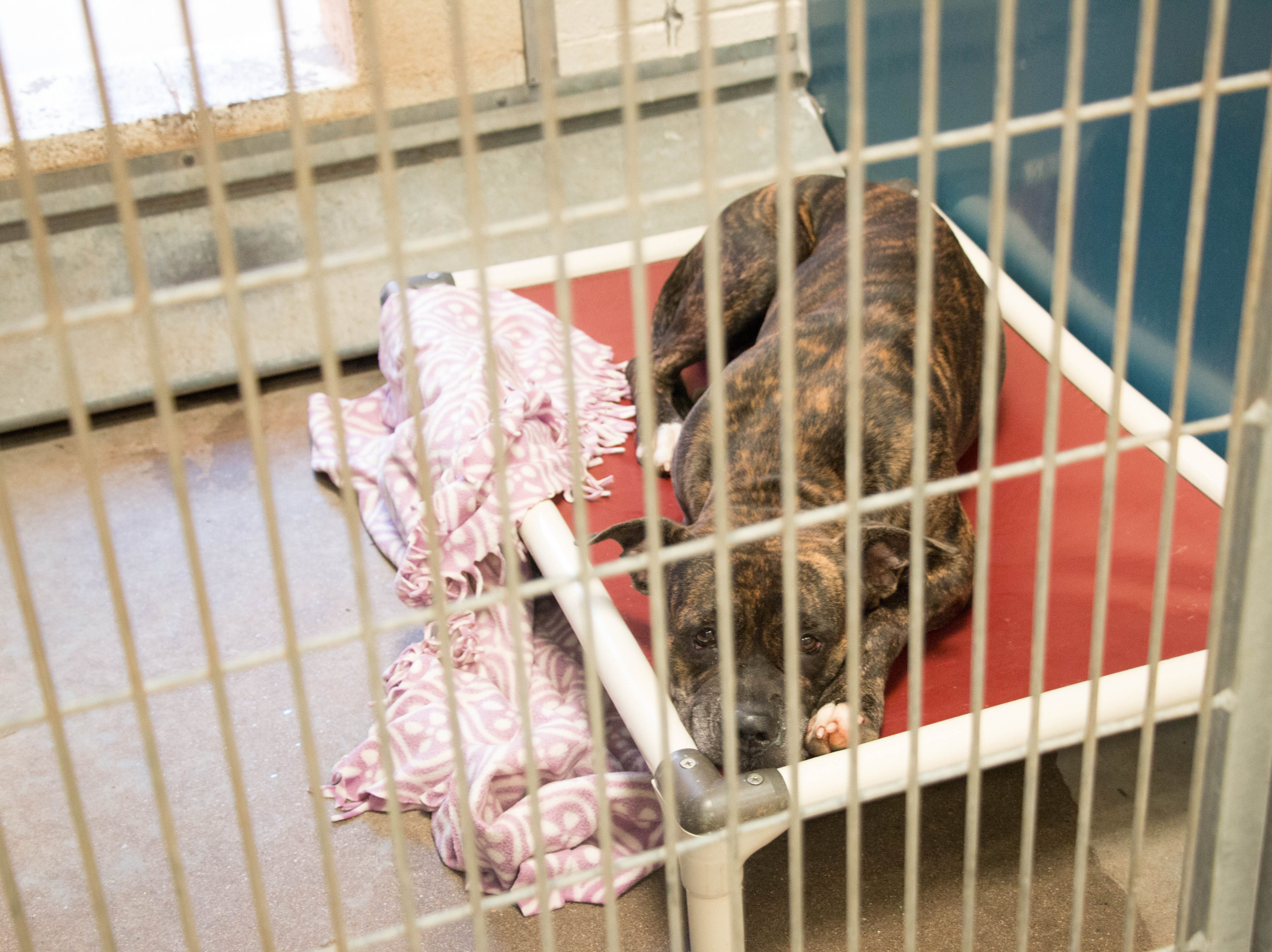 The Maricopa County Animal Care and Control shelter held free adult dog and cat adoptions during a 'Clear the Shelter' event August 18, 2018.