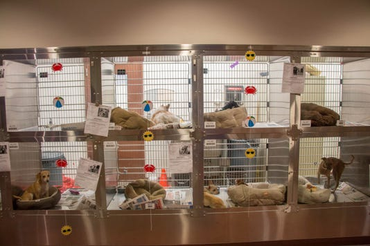 Maricopa County Animal Care and Control shelter