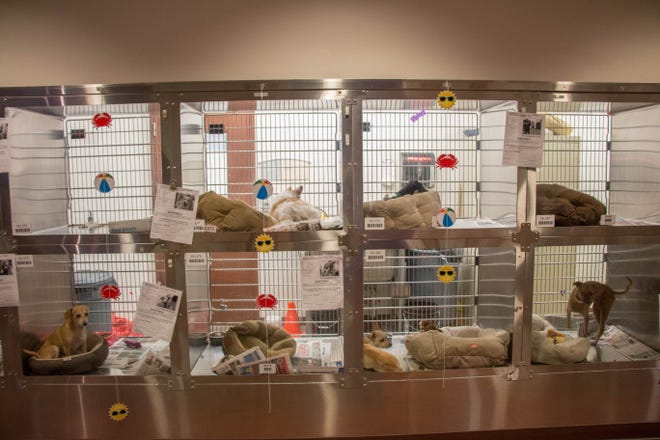 Maricopa County Animal Care and Control Shelter.