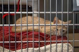 Nearly 40,000 animals come into this Phoenix animal shelter each year, and 95 percent of them find homes, according to officials.