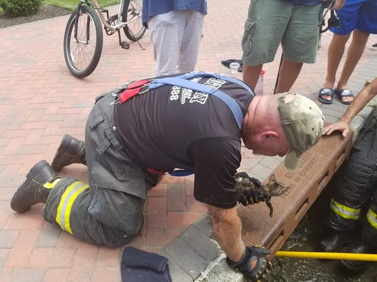 Oceanport Fire Chief Wes Sherman holds kitten rescued from storm drain