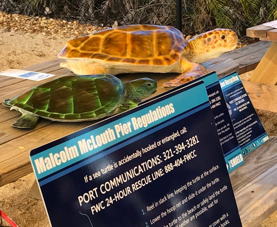 Port Canaveral has put up more signage alerting people what to do when they encounter a wounded sea turtle.