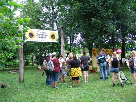 In addition to the acres of sunflowers, the festival included vendors, food, and entertainment. Participants took wagon rides to the fields where they had their choice of a cut sunflower. Additional cut sunflowers were also available for purchase.