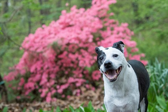TurfMtt advises on the best outdoor spaces for dogs.