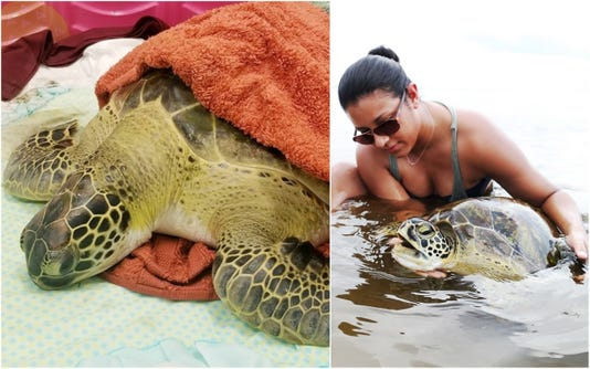 Red Tide Turtle WEB PROMO