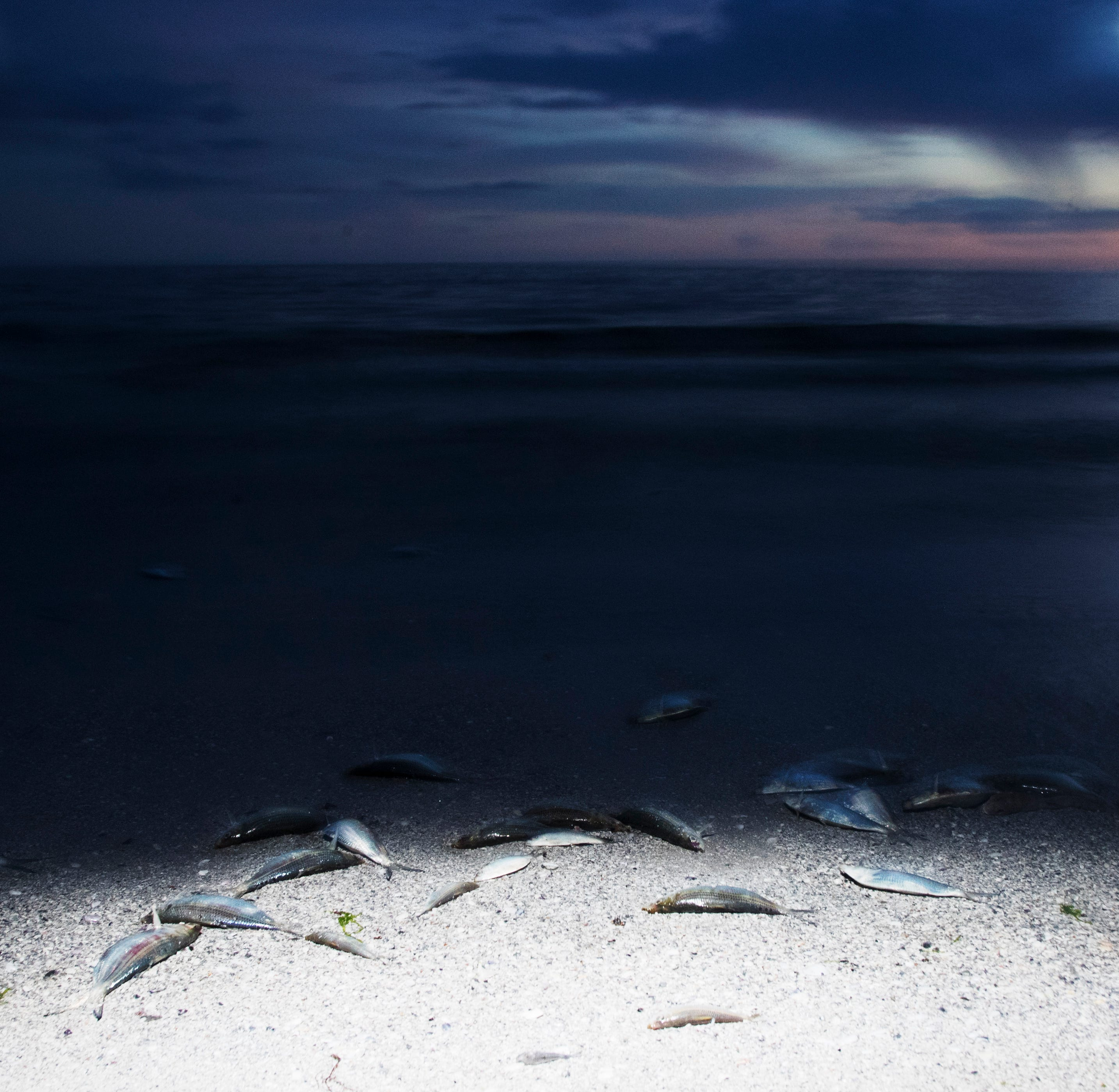 Florida algae crisis: Is red tide getting better? Not so much
