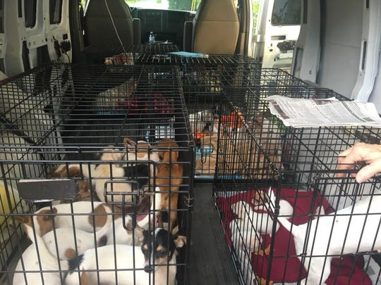 The Grainger County Humane Society takes in 23 new dogs, ranging from newborn puppies to adults, out of a group of 50. More dogs are expected as the humane society works with their owner.