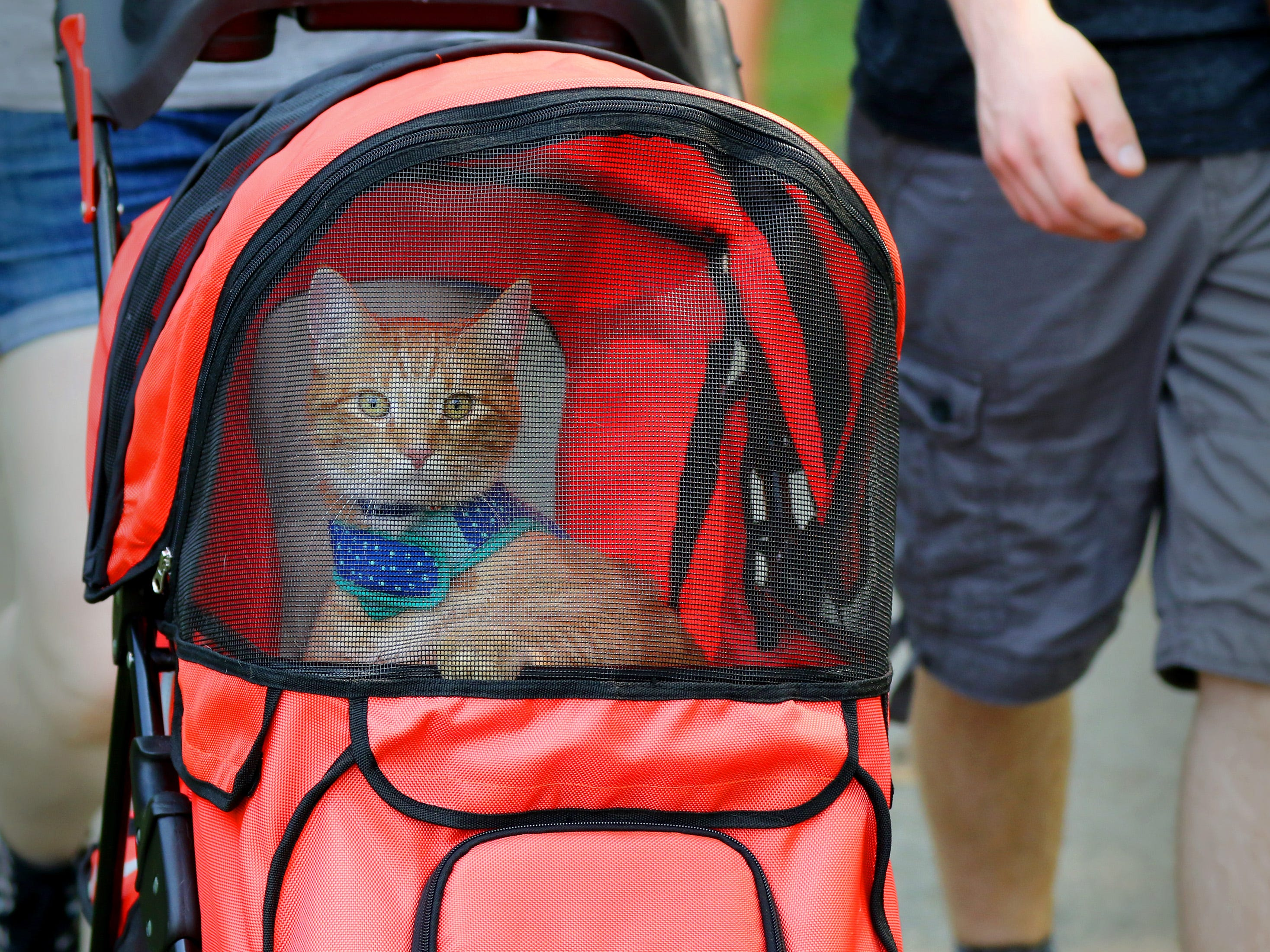 Stanley goes for a stroll with Sami Sergeant during the 11th annual HAWS Pet Fair at Rotary Park in Menomonee Falls on Aug. 11.