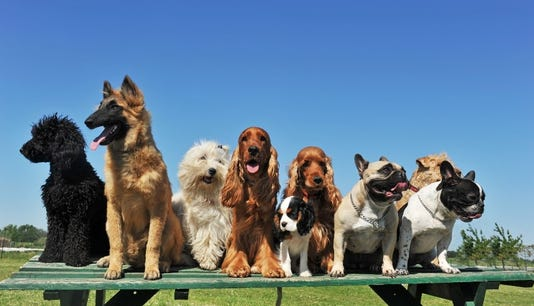 Dog owners who know their dogs' breed inside and out are able to provide them with responsible pet care.