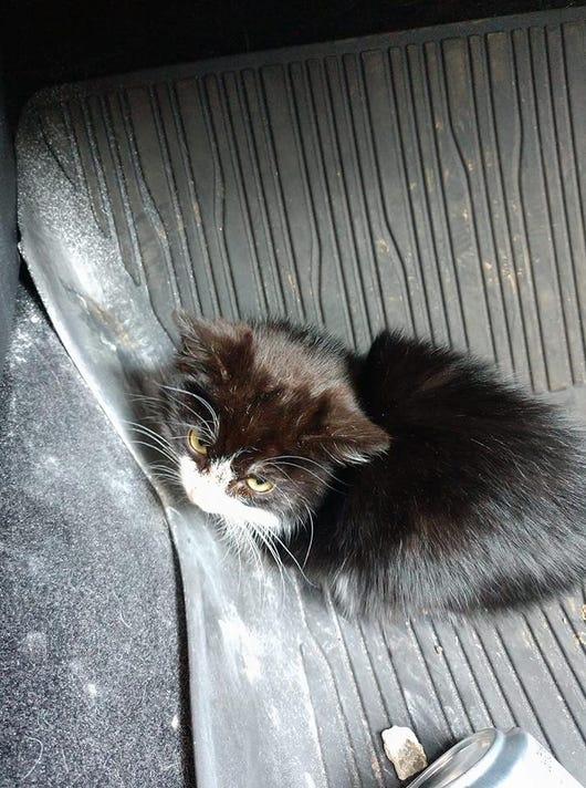 small kitten sick