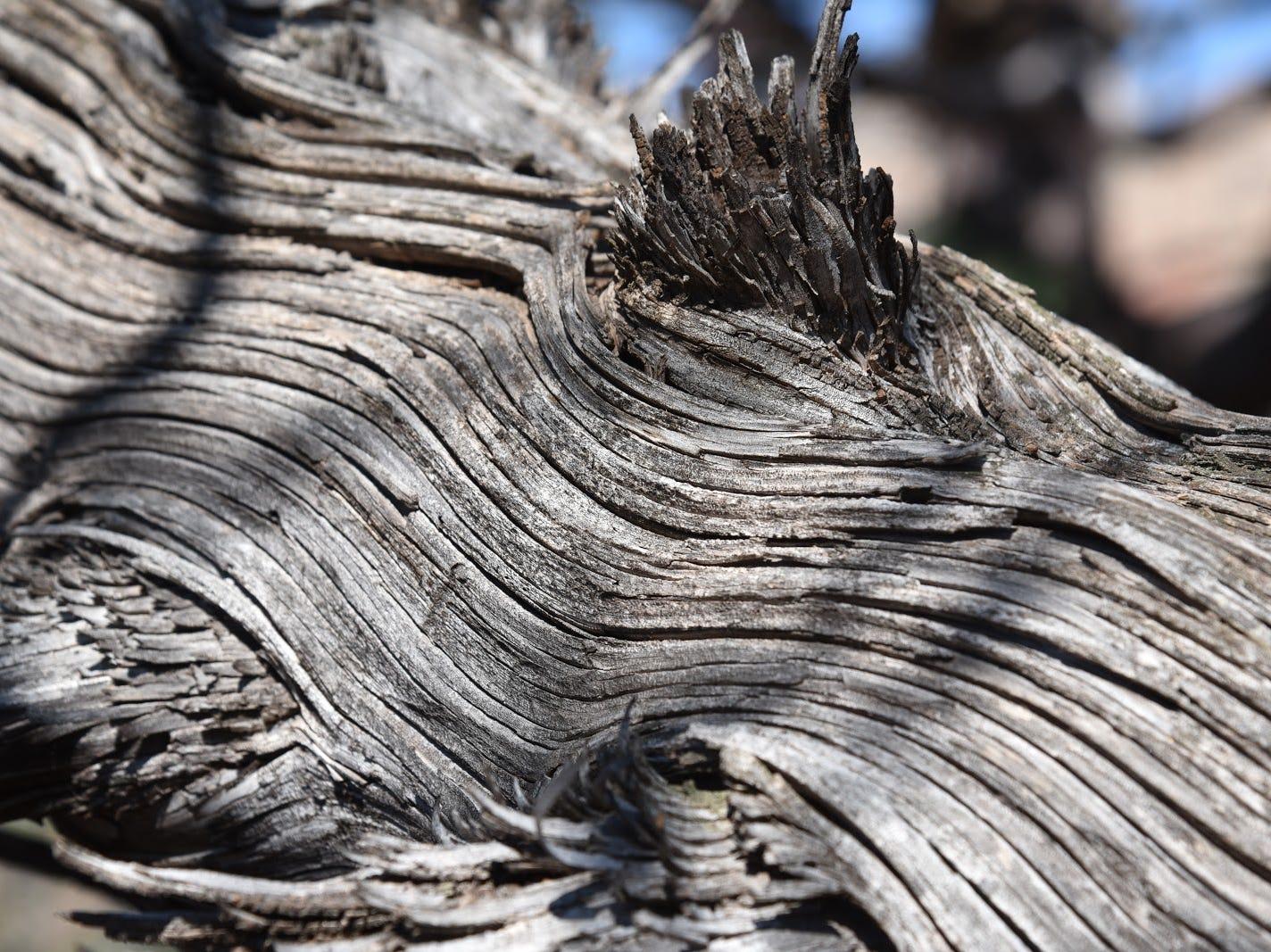 Artistic natural textures.