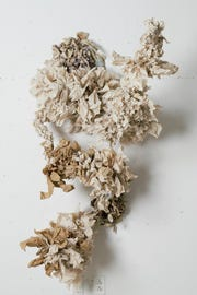 """""""Abundance II"""" by Jessica Elena Aquino is made with recycled paper towels."""