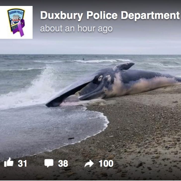 A Facebook post from the Duxbury Police Department on a whale washed up on an area beach.