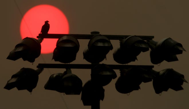 An osprey sits atop the field lights as the sun, obscured by haze, goes down above the Kitsap County Fairgrounds on Monday.