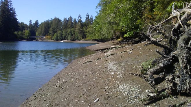 Approximately 1,200 feet of shoreline on McLane Cove was purchased by the Great Peninsula Conservancy.
