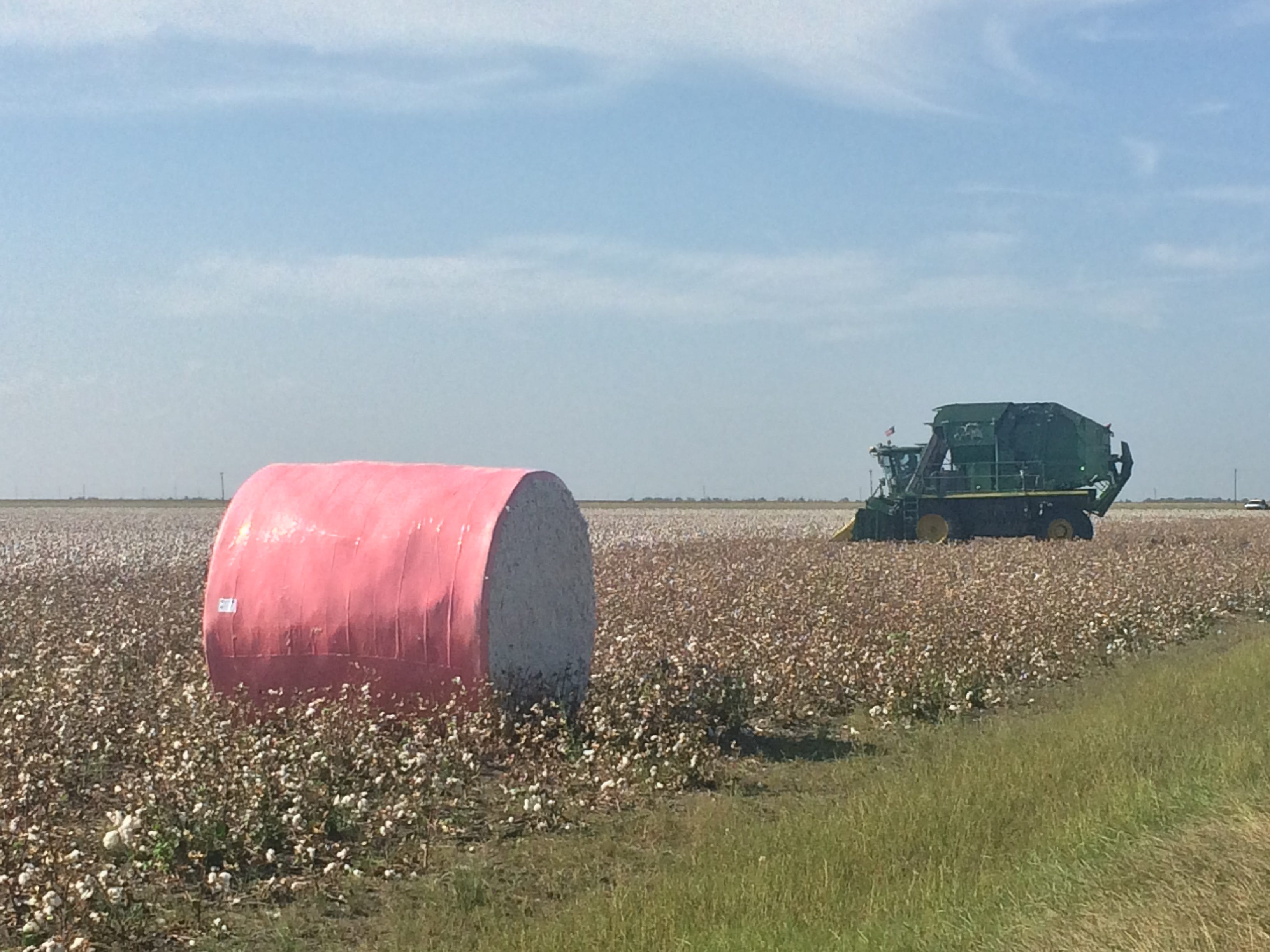 Cotton farmers say early rain and late drought together made harvest difficult this year.