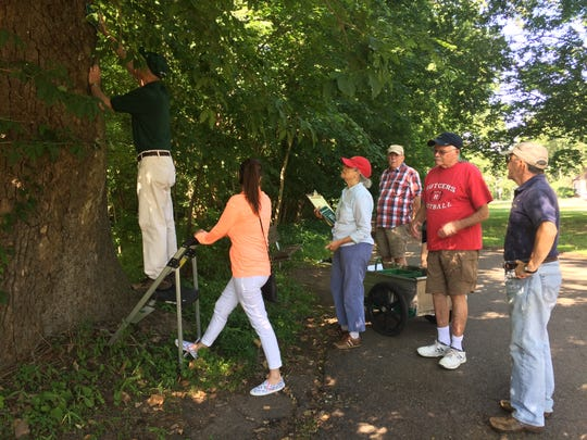 Members of the all-volunteer Master Tree Stewards of Union County get expert training in topics related to local trees, and they share their knowledge with the community.