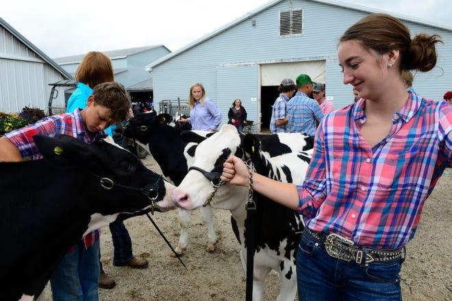 Katelyn Klotz, 17, of Risingsun and a member of of Lakota FFA, waits for judging with her calf, Pongo, at the Sandusky County Fair on Tuesday.